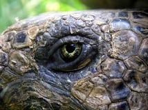 Oeil de la tortue Photographie stock libre de droits
