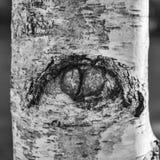 Oeil de nature image libre de droits