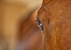 Oeil de plan rapproché de cheval Image libre de droits