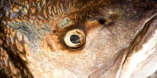 Oeil de poissons Image stock