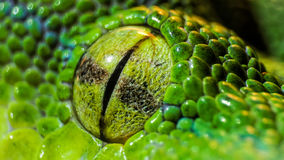 Oeil de python images libres de droits