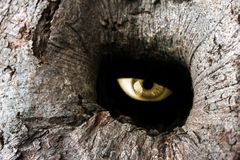 Oeil de trou d'arbre Images stock