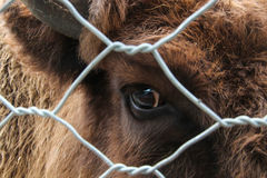 Oeil de vache Photo libre de droits