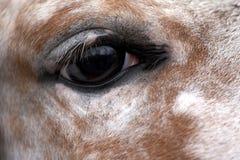 Oeil du cheval Images libres de droits