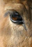 Oeil du cheval Image libre de droits