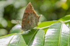 Oeil du papillon photo stock