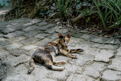 Oeil du ` s de chat Image stock