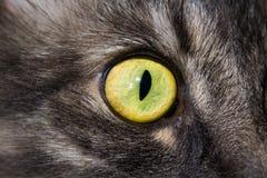 Oeil du ` s de chat grand Photos libres de droits