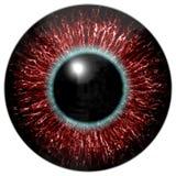 Oeil ensanglanté rouge d'étranger ou d'oiseau avec le cercle bleu autour de l'élève Photo stock