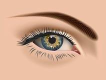 Oeil femelle Photo stock