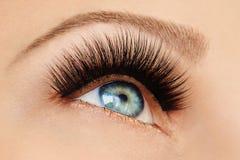 Oeil femelle avec de longs cils faux extrêmes et revêtement noir Prolongements de cil, maquillage, cosmétiques, beauté photographie stock