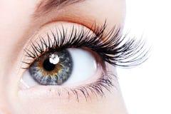 Oeil femelle de beauté avec de longs cils faux d'enroulement Photo libre de droits