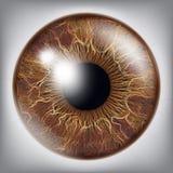 Oeil humain Iris Vector illustration réaliste du globe oculaire 3D Image stock