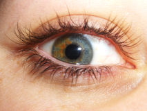 Oeil intense image stock