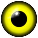 Oeil jaune d'oiseau ou d'étranger d'isolement sur le fond blanc Image libre de droits