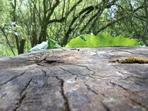 Oeil plus attentif à un tronçon d'arbre Photos libres de droits