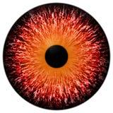 Oeil rouge animal avec le fond blanc, rouge 3d image stock