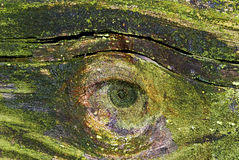 Oeil sur la nature Photo stock