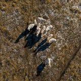 Oeil sur les moutons photos stock