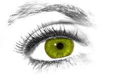Oeil vert image libre de droits
