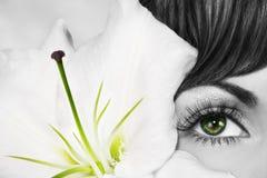 Oeil vert Photographie stock libre de droits