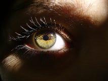 Oeil vert dans l'ombre Photos libres de droits