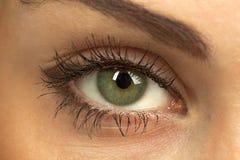 Oeil vert du `s de femme Photo stock