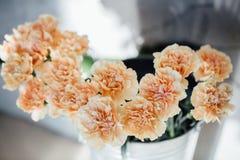 Oeillet beige de fleur fond floral des oeillets dans des couleurs en pastel Fermez-vous, macro Photographie stock libre de droits