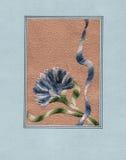 Oeillet bleu. Images stock