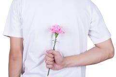 Oeillet rose se cachant derrière de l'homme Image stock