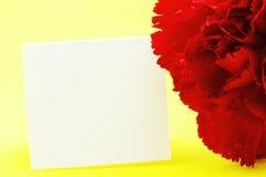 Oeillet rouge sur le fond jaune Image stock