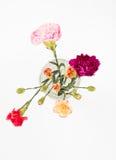 Oeillets colorés en verre images libres de droits