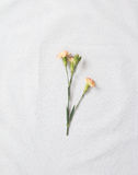 Oeillets jaunes photographie stock libre de droits