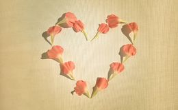Oeillets roses dans une forme de coeur Image stock