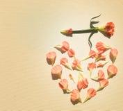 Oeillets roses dans une forme de coeur Images stock