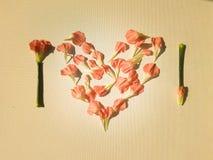 Oeillets roses dans une forme de coeur Photo stock