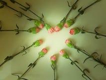 Oeillets roses dans une forme de coeur Photographie stock libre de droits