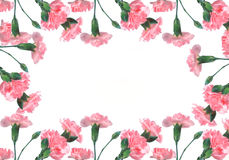 Oeillets roses sur un fond blanc illustration stock