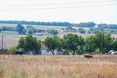 Oekraïens dorp in de zomer Royalty-vrije Stock Foto's