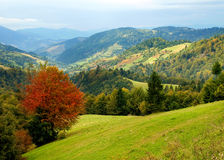 Oekraïens landschap. Stock Foto's