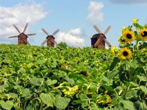 Oekraïens landschap Stock Afbeeldingen