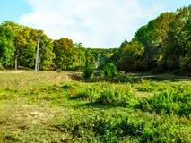 Oekraïense aard, typisch landschap met loofbomen Landweg aan het meer bij de bodem van het ravijn, Elektrische Polen  royalty-vrije stock foto
