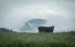 Oekraïense bergen Stock Fotografie