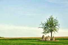 Oekraïense houten bijenkorven op een gebied onder een boom Royalty-vrije Stock Afbeeldingen