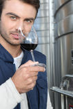 Oenologist. Smelling and assessing wine Stock Photography