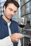 Oenologist che analizza un vino Fotografie Stock