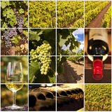 Oenology and wine collage. Oenology and wine square collage Stock Photography
