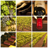 Oenology and wine collage. Oenology and wine square collage Stock Photo