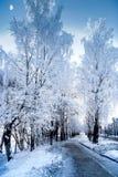 Oerhörd sikt av snöig träd i en frostig dag för vinter royaltyfri foto