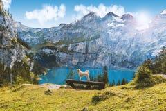 oeschinen o lago em switzerland Fotografia de Stock Royalty Free